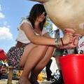Obejrzyj galerię: X Jubileuszowe Mistrzostwa Polski w dojeniu sztucznej krowy