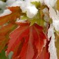 Obejrzyj galerię: W październiku - zima piękna i groźna...