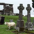 Obejrzyj galerię: Szkocka korespondencja wakacyjna
