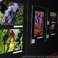 Obejrzyj galerię: Wystawa Zielonym okiem - przyroda Tatr