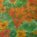 Obejrzyj galerię: Wystawa malarstwa dr Haliny Romualdy Zięby z Kościeliska