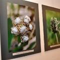 Obejrzyj galerię: Punkt widzenia. Fotografia przyrodnicza Andrzeja Gibały