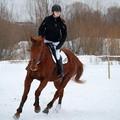 """Obejrzyj galerię: """"Puchar Tatr"""" - zawody konne w zrywce drzewa i skokach przez przeszkody"""