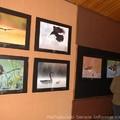 Obejrzyj galerię: Ptaki Polski w obiektywie członków Nikon Klub Polska
