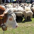 Obejrzyj galerię: Święto Pasterskie w Ludźmierzu