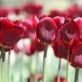 Obejrzyj galerię: Nowy Targ kwitnie