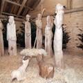 Obejrzyj galerię: Szopka bożonarodzeniowa w Zakopanem