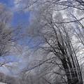 Obejrzyj galerię: Bieszczady zimą – baśniowa kraina 2...