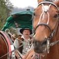 Obejrzyj galerię: XVIII Przednówek w Polanach - paradny przejazd