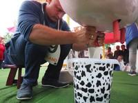 Mistrz w dojeniu sztucznej krowy!