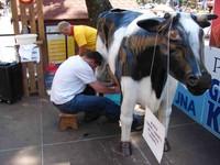 Zdrowa krowa do dojenia gotowa