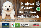 Krajowa Wystawa Owczarków Podhalańskich