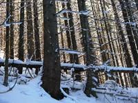 Podświetlony las w Tomanowej, fot. Wojtek Narciarski